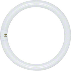 Satco® T9 Circline Fluorescent Lamp - FC8T9/CW/RS